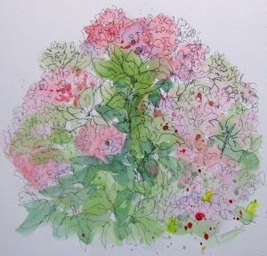 Hydrangea Christine Lester